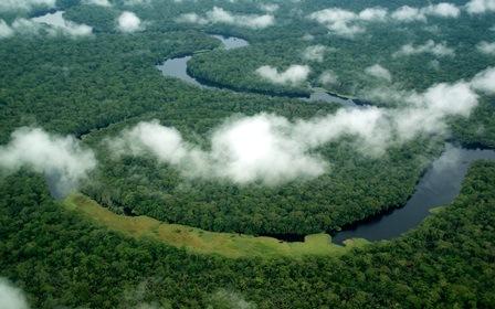 Environnement : le Parc national de la Salonga retiré de la liste du patrimoine mondial en péril (Congoforum)